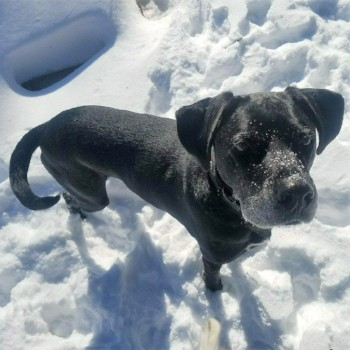 Winter Storm Pet Safety