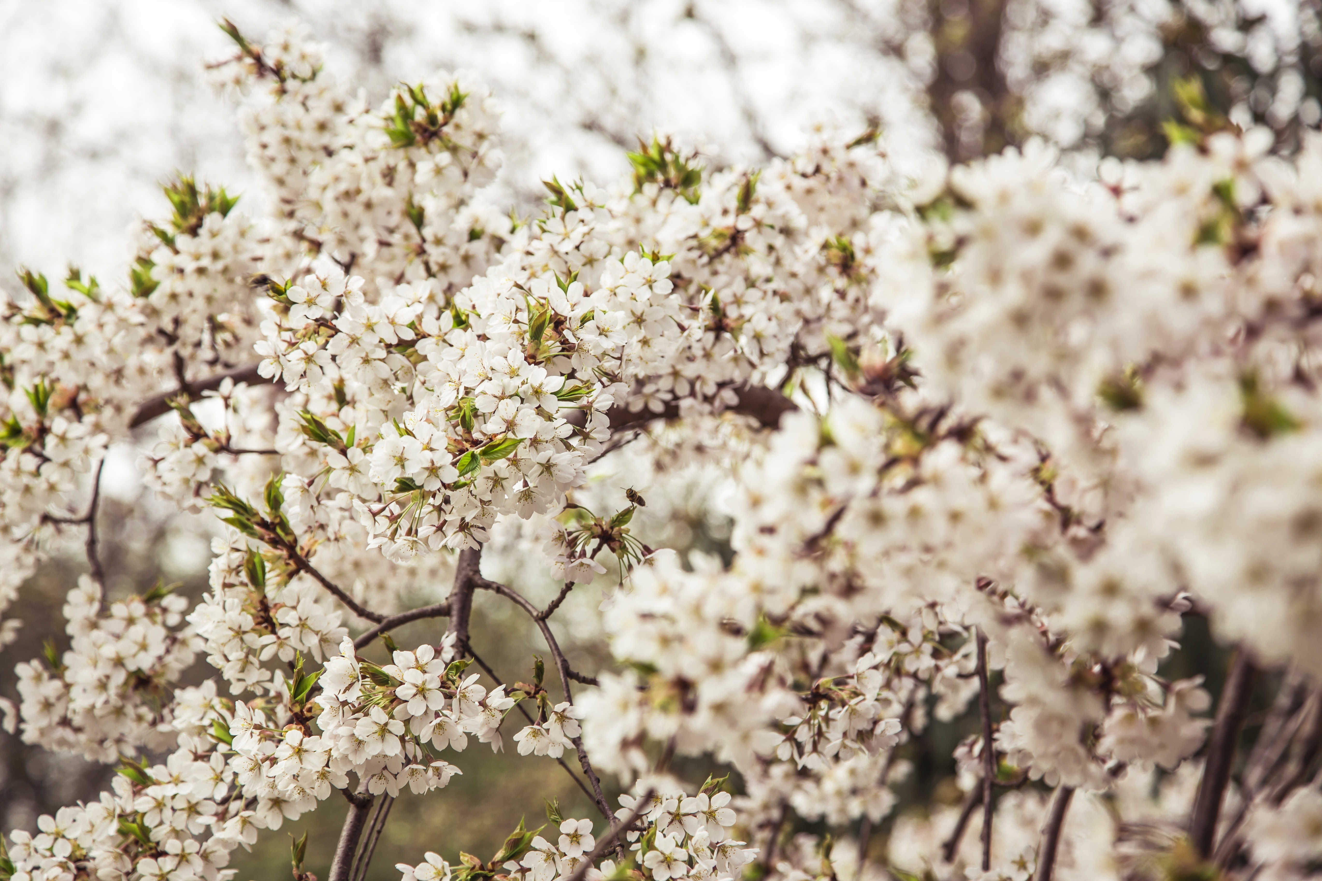 Spring – A Time of Renewal