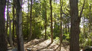 Rhode Island Woodland Partnership