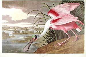 Audubon Print Sale Successful