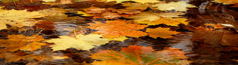 Fall Leaves in a Puddle