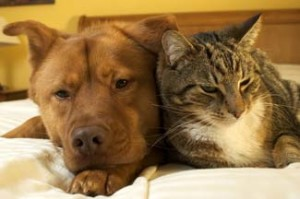Pet-Friendly Listings