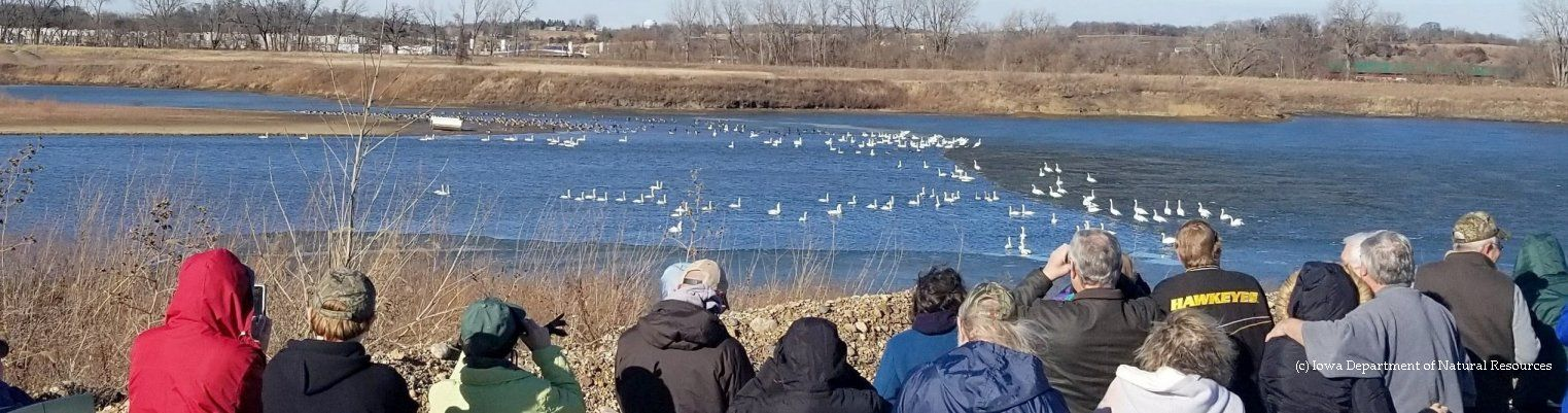 Birding Festivals and Swan events are held across North America. Discover what you can do, see and explore at the events. Be inspired!