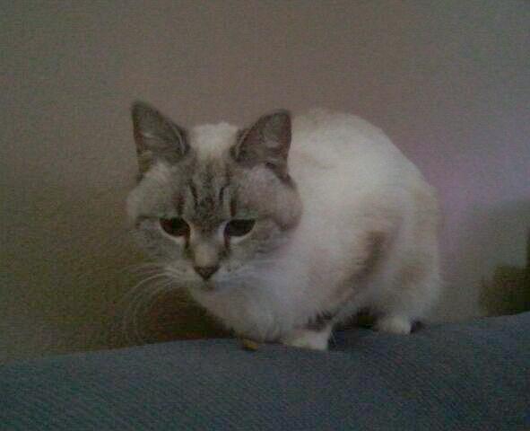 Lily (Princess)