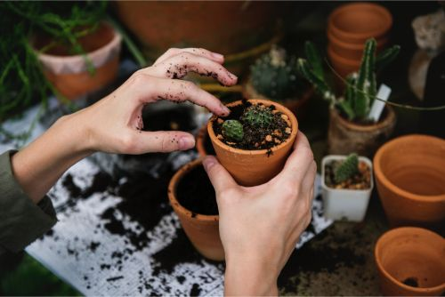 How Gardening Can Help Your Body and Your Mind