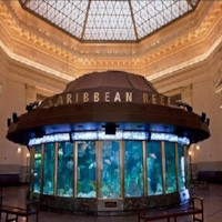 Picture of shedd aquarium