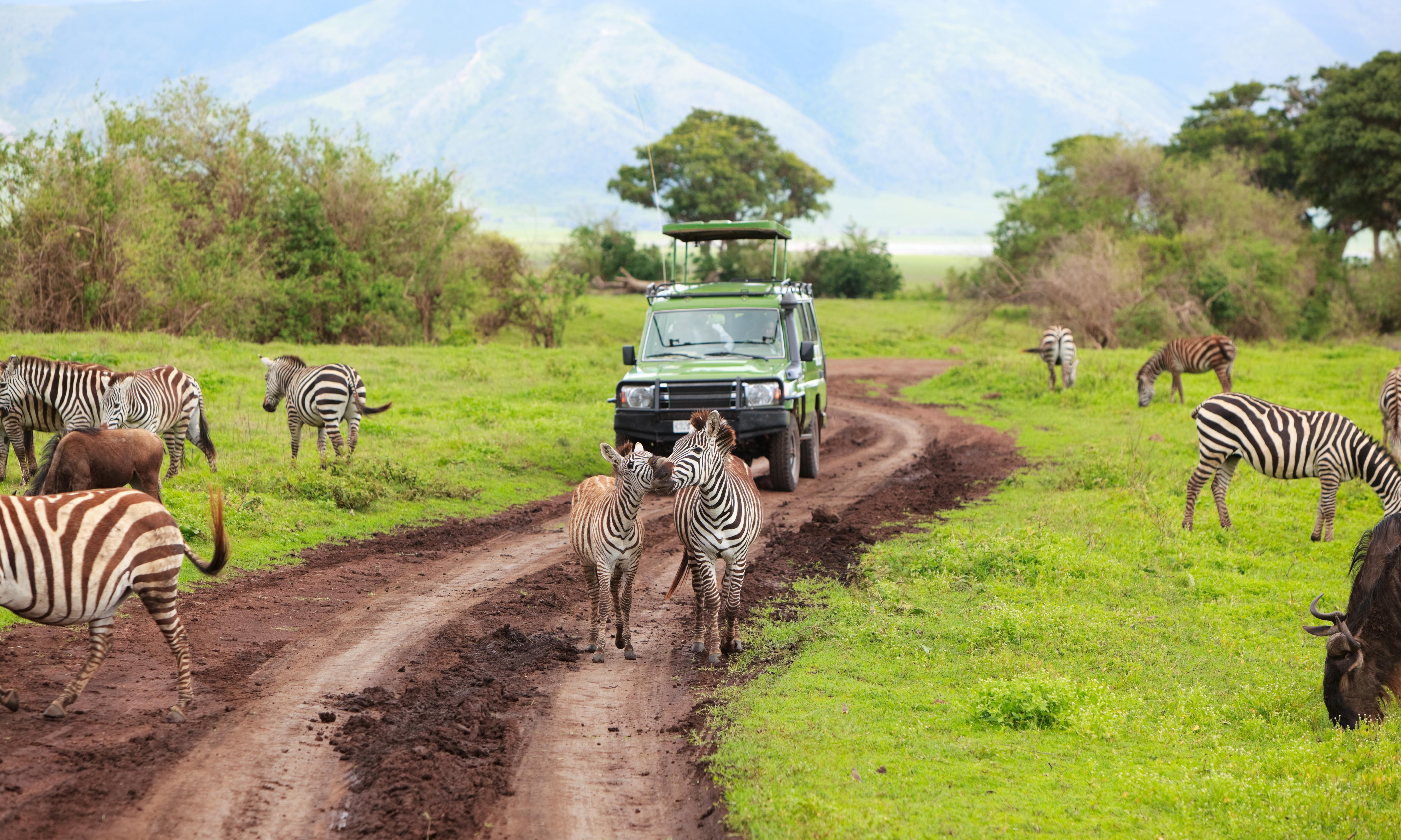 WEI Great Wildebeest Safari