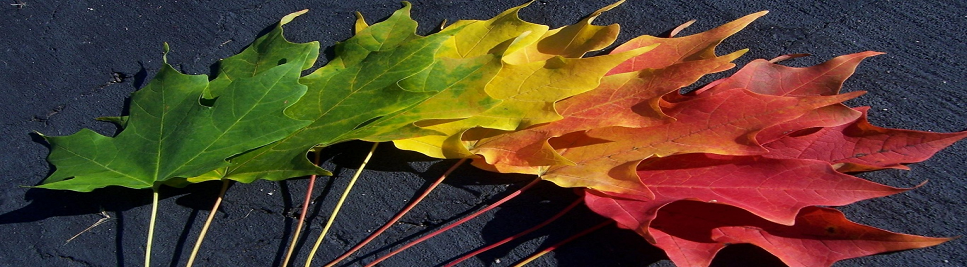 Fall LEaves in Color Group