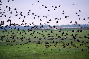 WHAT REMAINS AFTER THE SANDHILL CRANES LEAVE