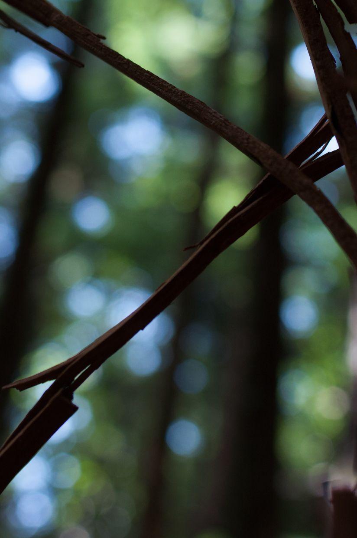 Rainbird 7, Cedar Bark Silhouette