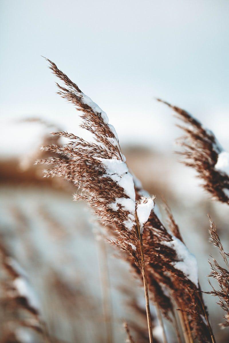2021 Keep Oklahoma Beautiful Winter Workshop