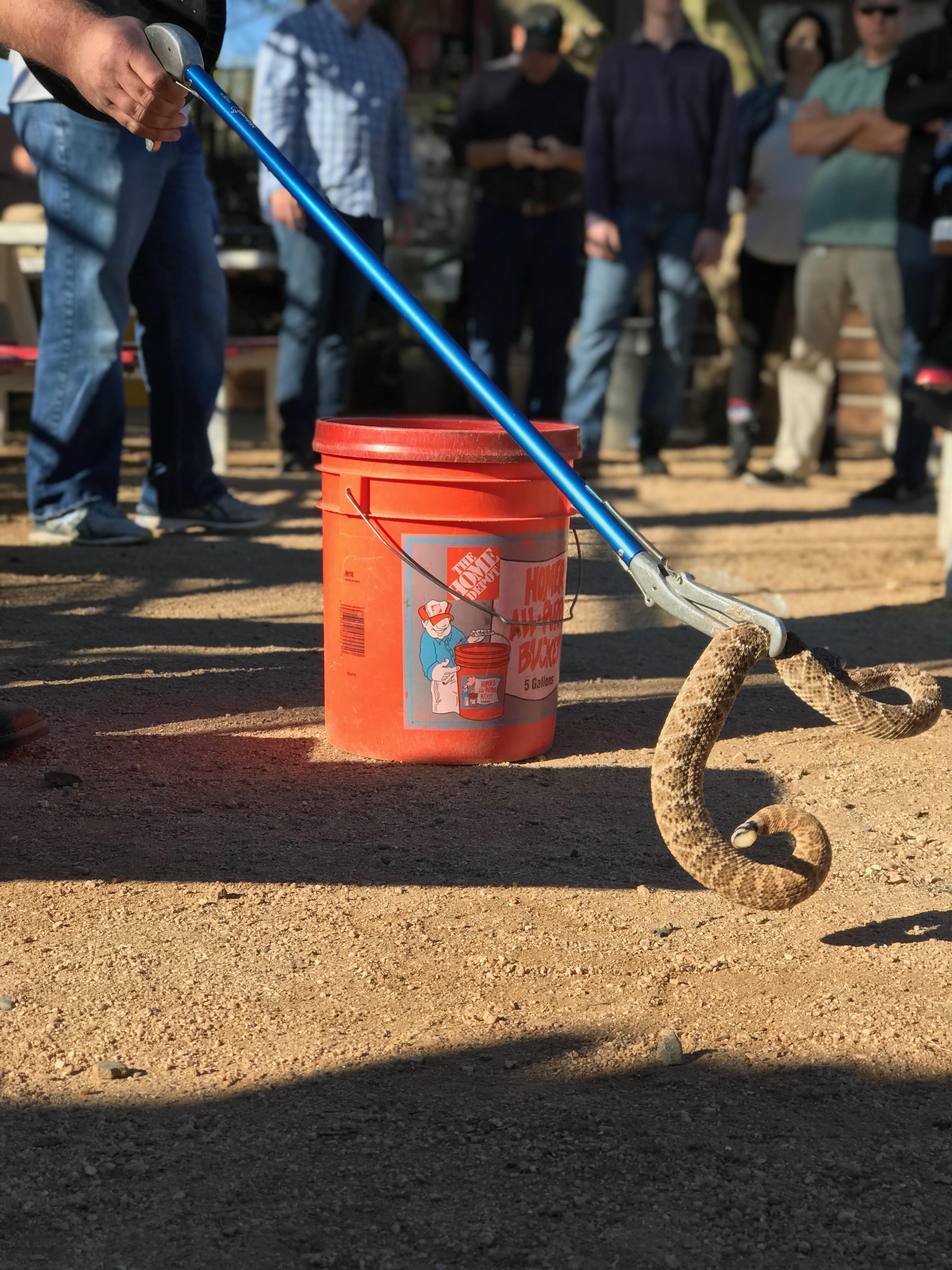 Venomous Snake Training