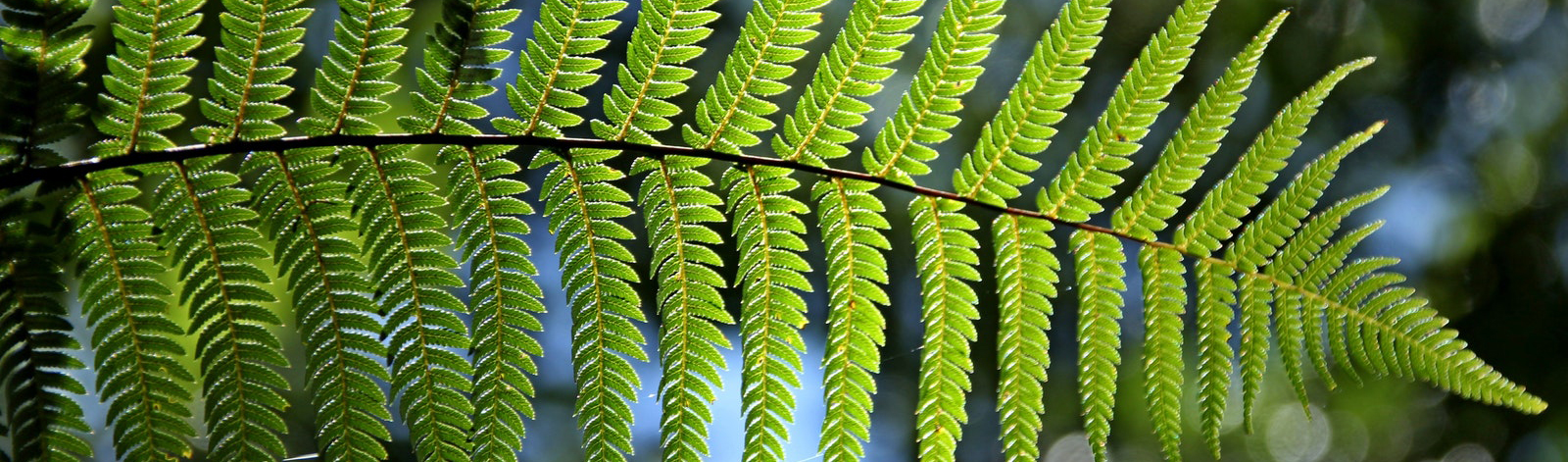 A vibrant fern, signifying growth and abundance