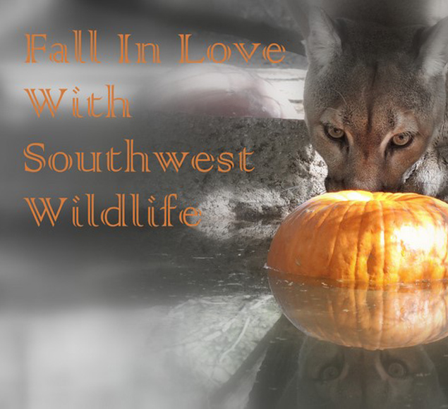 Fall in Love with Southwest Wildlife
