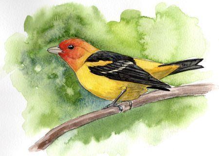 Sketching Birds in Watercolor with Laurel Mundy