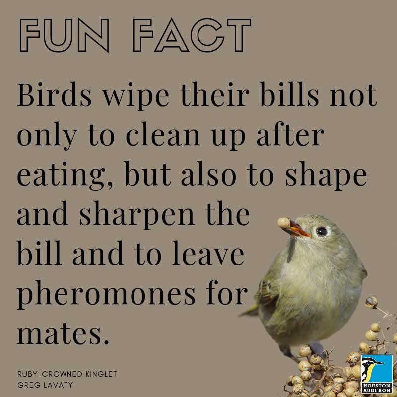 Bird bill cleaning fun fact