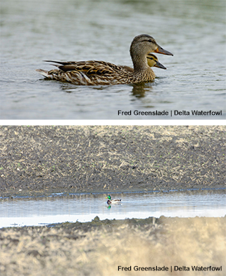 Spring Wetlands Update: Heavy Rains Soak Dakotas and Prairie Canada