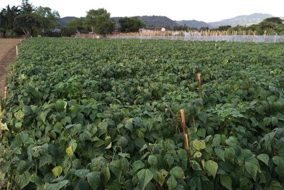 How was Guatemala, part 6: Field of Dreams
