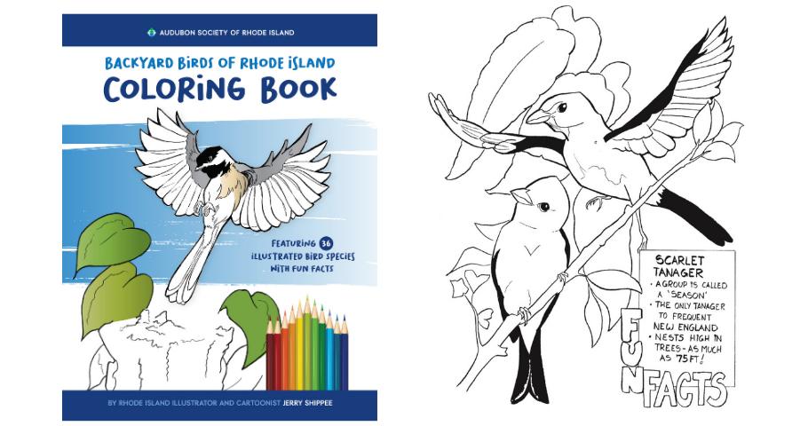 NEW! Backyard Birds Coloring Book