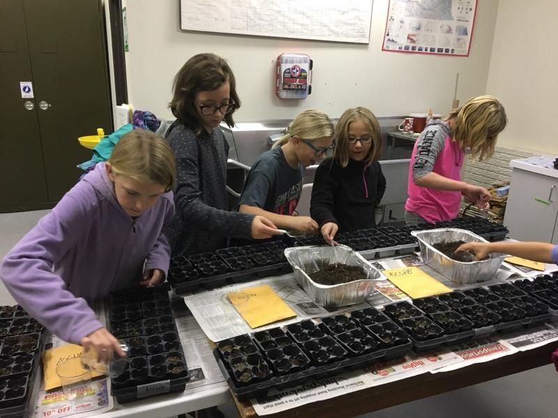 Girl Scouts and Greenhouses