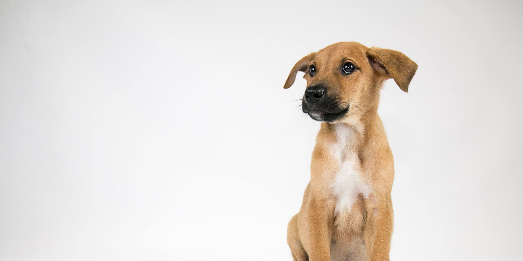 Make a Difference in the life of an Adoptable Dog.