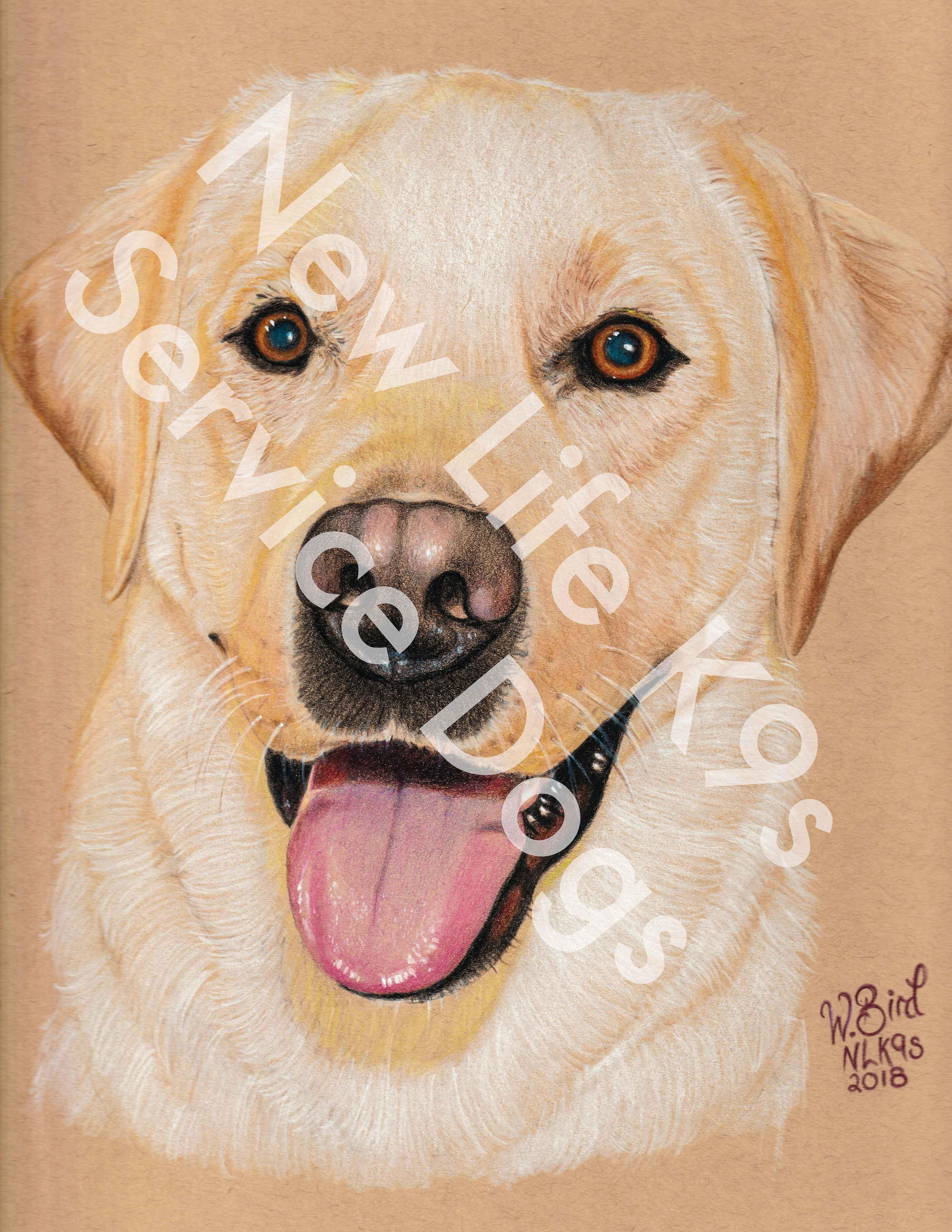 Eddie the Labrador