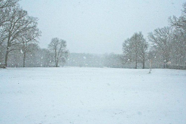 Winter Gallery 3