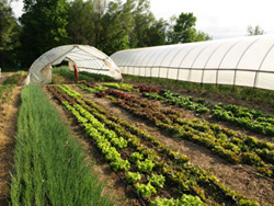 Snapshot of Gibbs Road Farm - Tunnel and rows
