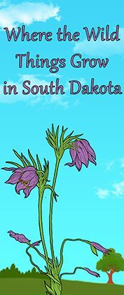 'Where the Wild Things Grow in South Dakota' exhibit opens Dec. 12 at Cultural Heritage Center
