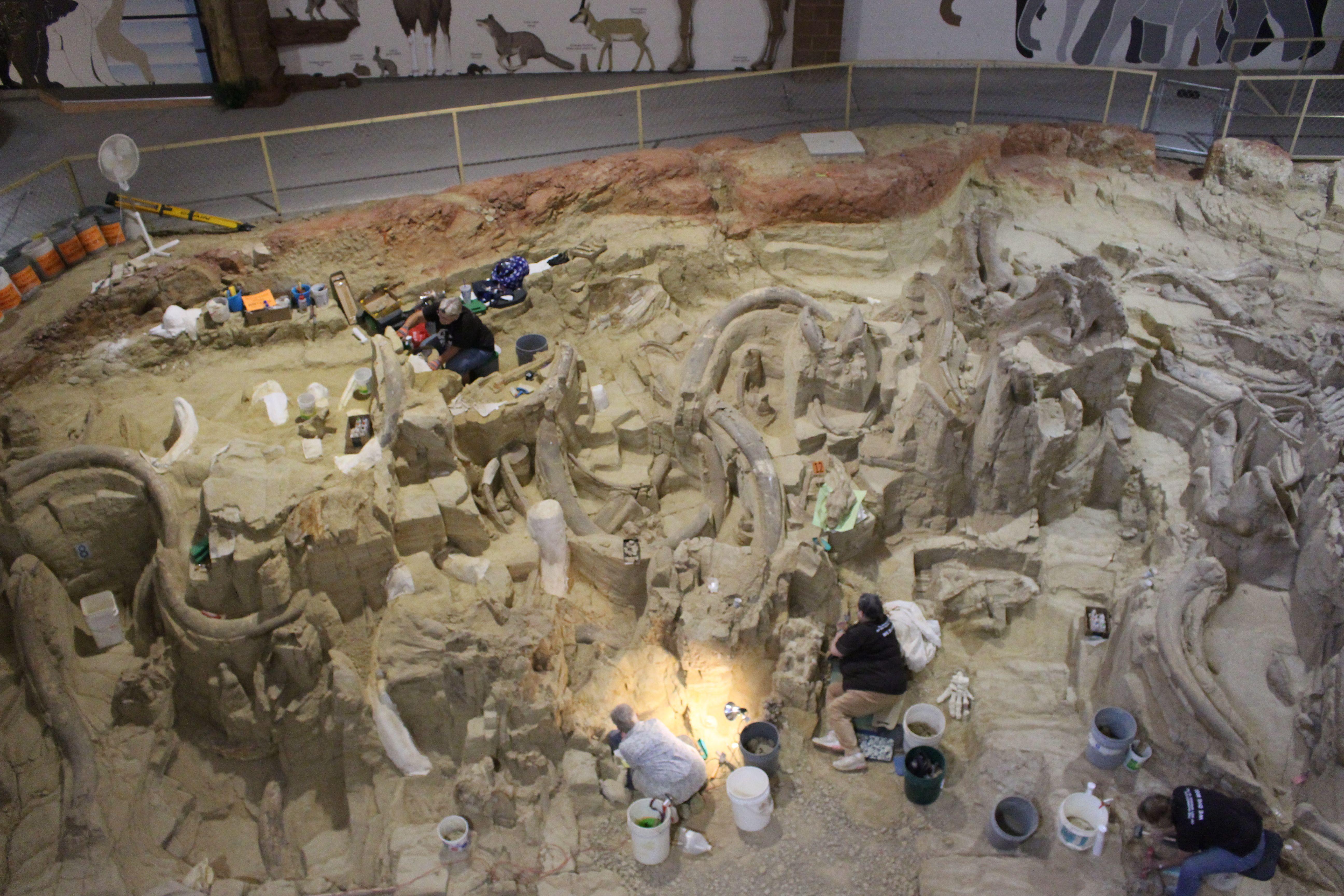 Ice Age Explorers