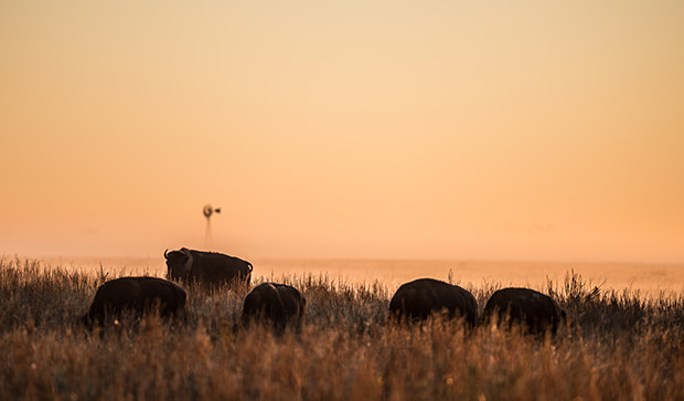 Beasts of the Grasslands