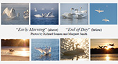 """Set of 8 Exclusive TTSS notecards. """"Early Morning, End of Day"""". $16"""