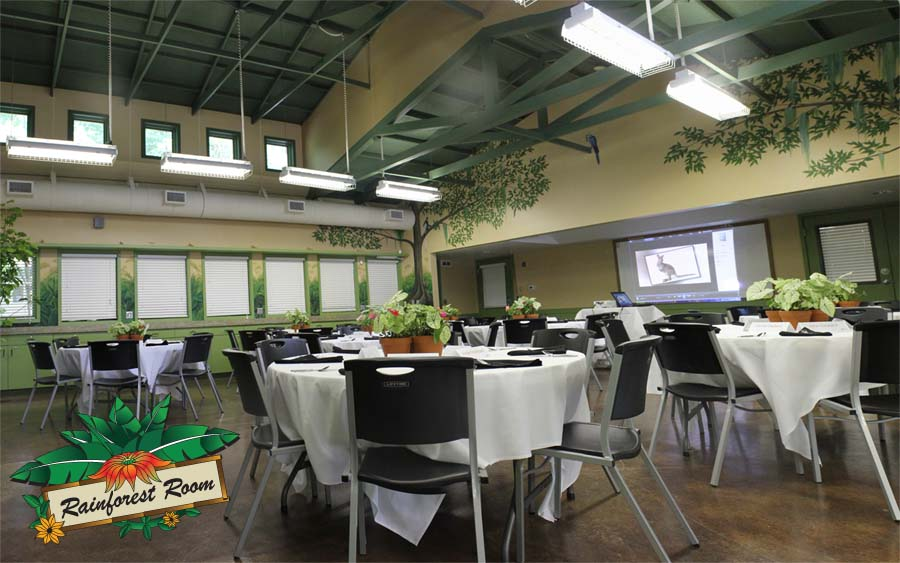 Rainforest Room