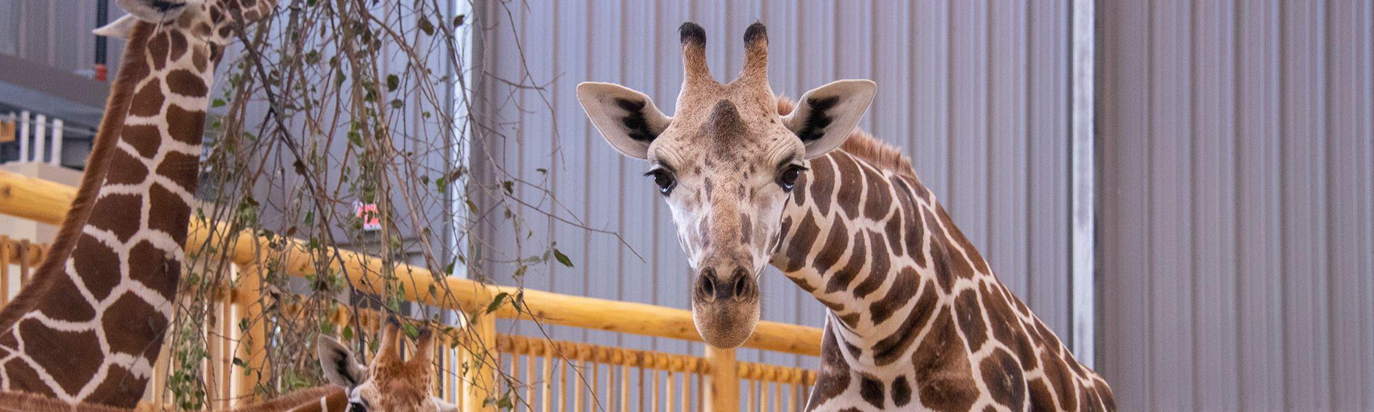 Zoo Trip Summer Bundle