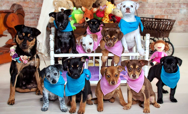 Help Us Continue to Save Precious Pets