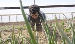 Bobby planting