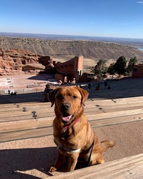 Umber's foster weekend included a tour of Red Rocks