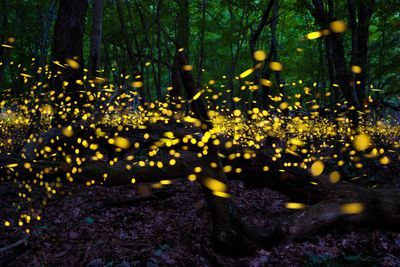 CNC: a Thirst for Nature event - Night Hike and Firefly Walk