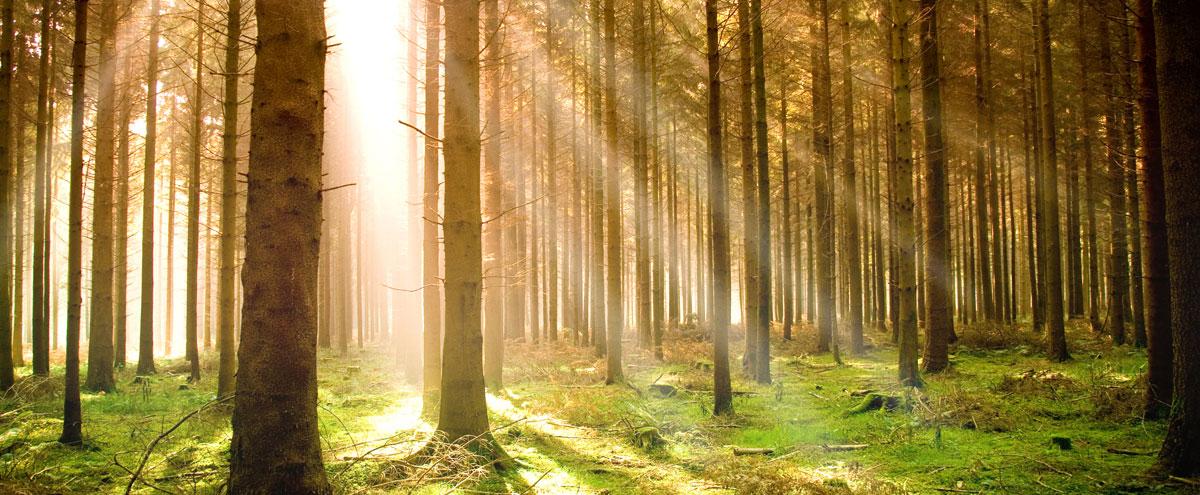 Through green practices