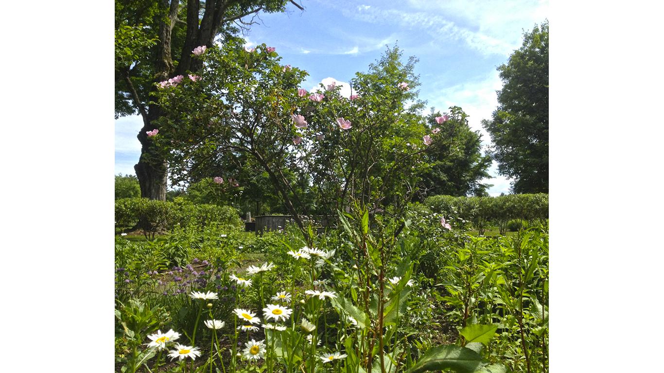 New England Unit Teaching Garden