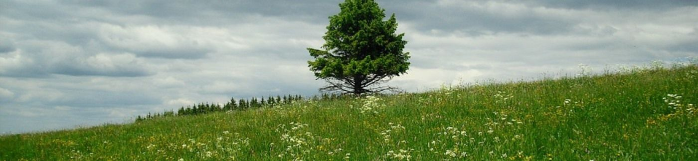 Tree on Hill with Green Grass