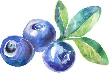 Image of blueberry included in custom sign for Cambro flex cart graphics