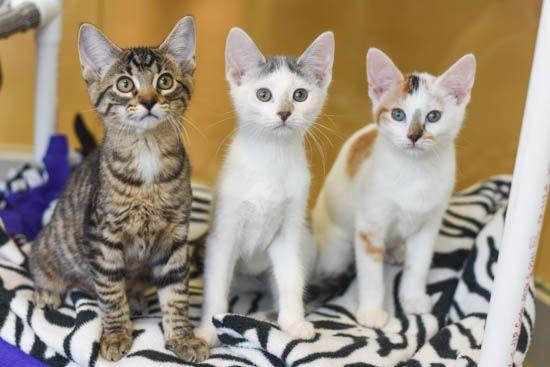 Animal Care & Adoption Counselor Job Description
