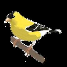 Goldfinch Sponsor