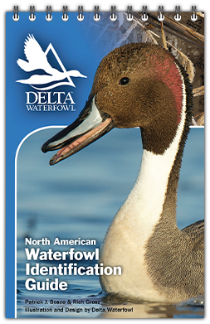 Delta Waterfowl's New Waterfowl ID Guide Was Made For Your Blind Bag