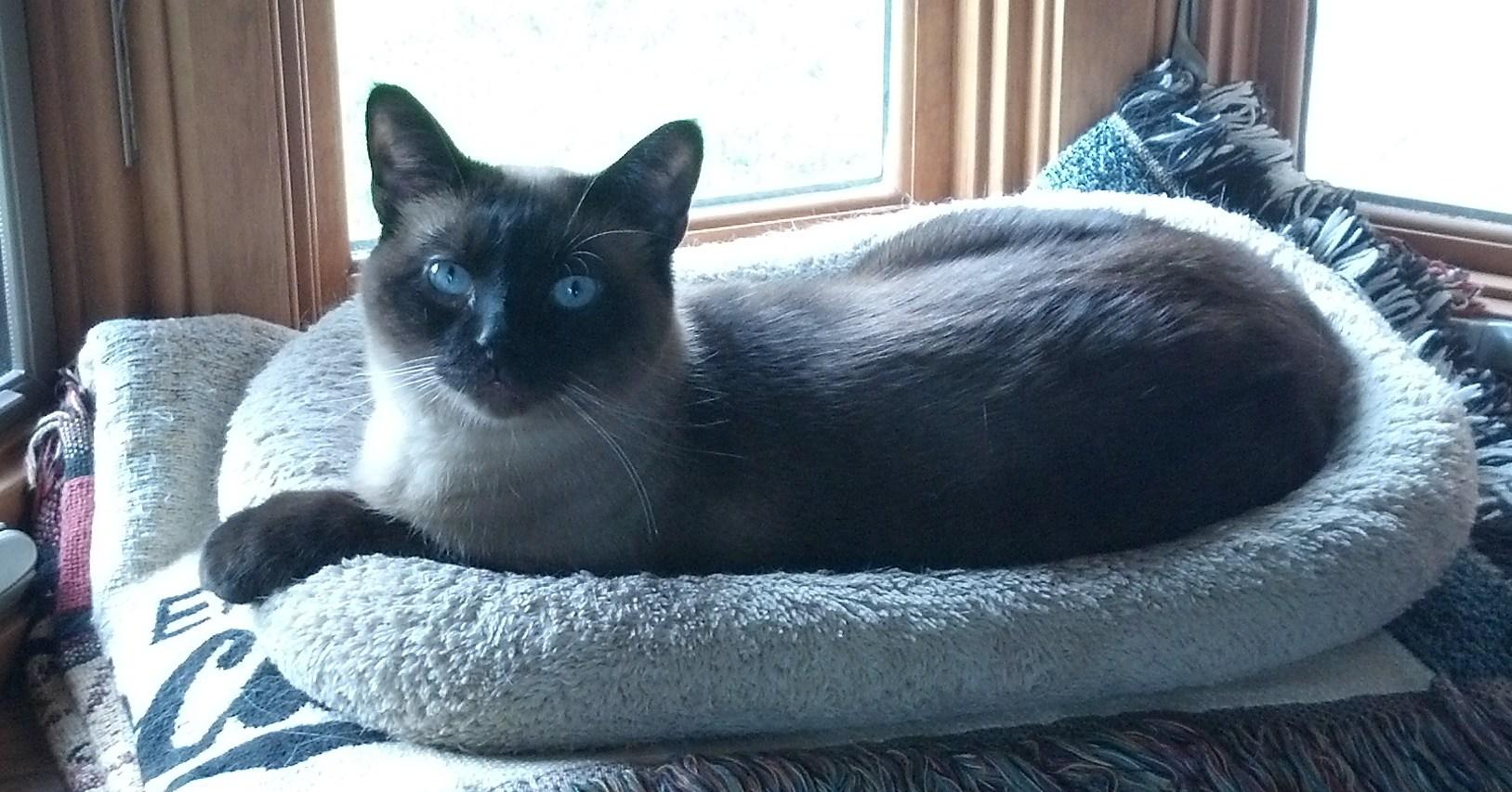 Fabulous Feline Adoption Promotion