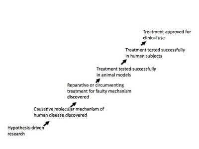 Image of disease treatment pathway: Hypothesis-driven research>Causative molecular mechanism of human disease discovered>Reparative or circumventing treatment for faulty mechanism discovered>Treatment tested successfully in animal models>Treatment tested