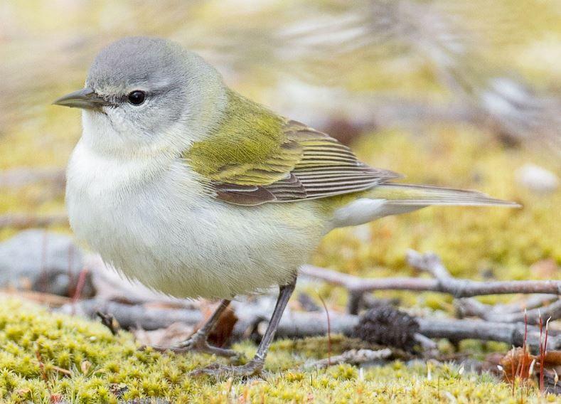 Amazing Birding Day