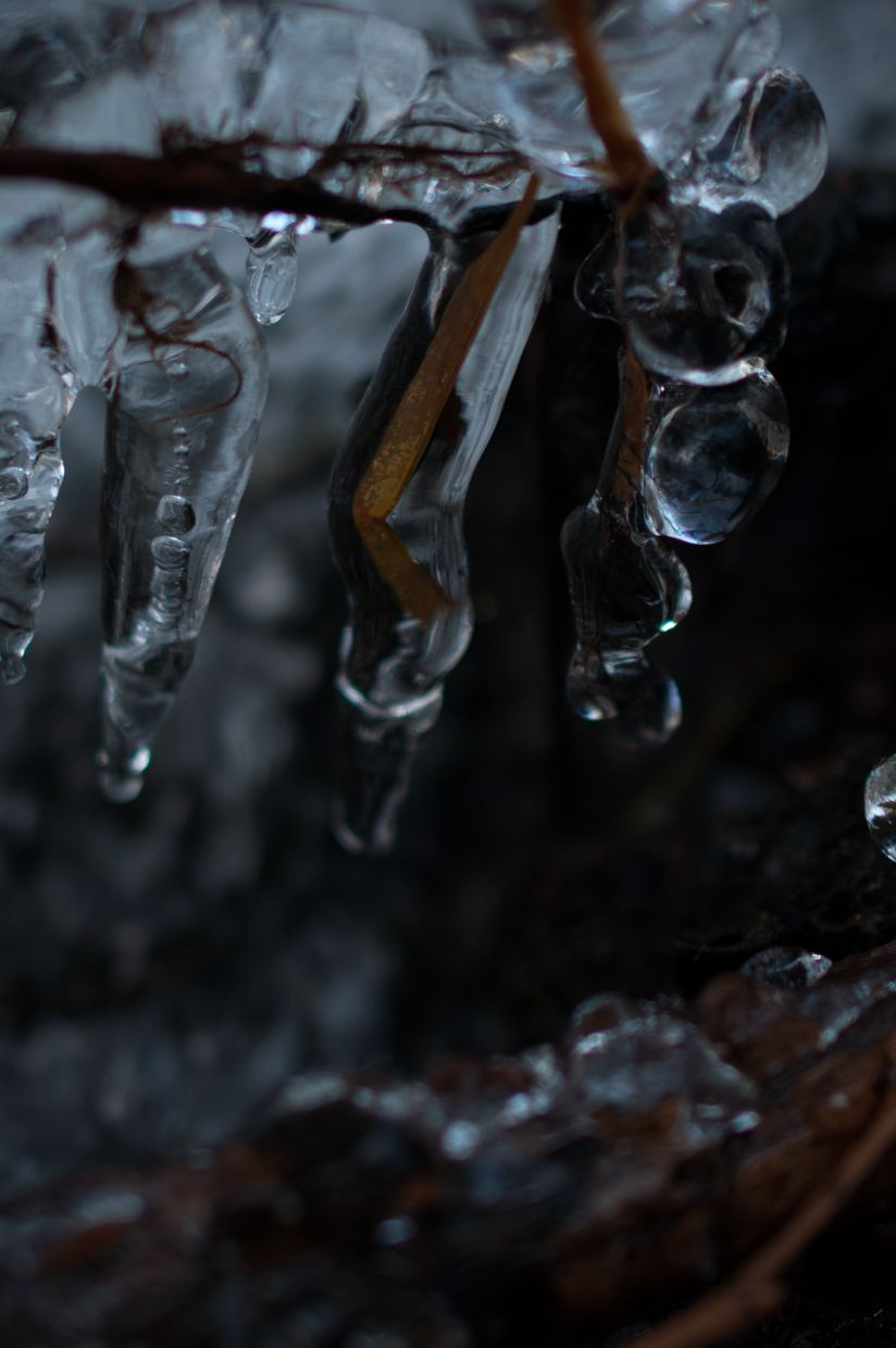 Whitman 5, Grass Icicles