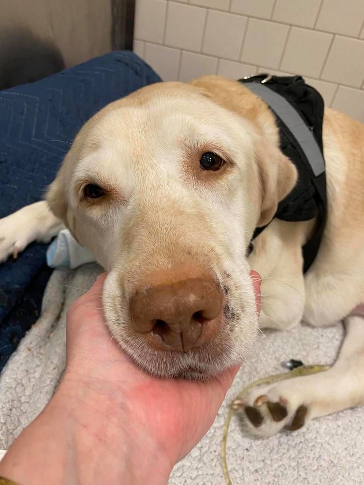 Injured Dog Found in Paterson Given Hope for Better Life (TAPinto.net)